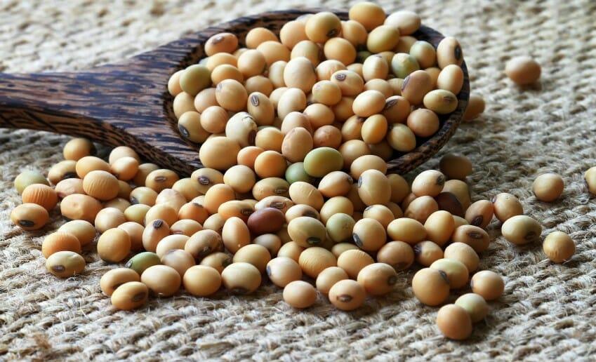 Le soja : peut-on en consommer à volonté ?