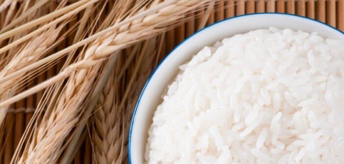le riz des vertus controversees