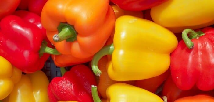 Le poivron ou piment doux pendant un régime minceur