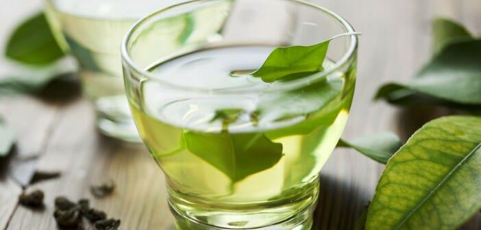 Le thé vert fait-il vraiment maigrir ? - Le blog Anaca3.com