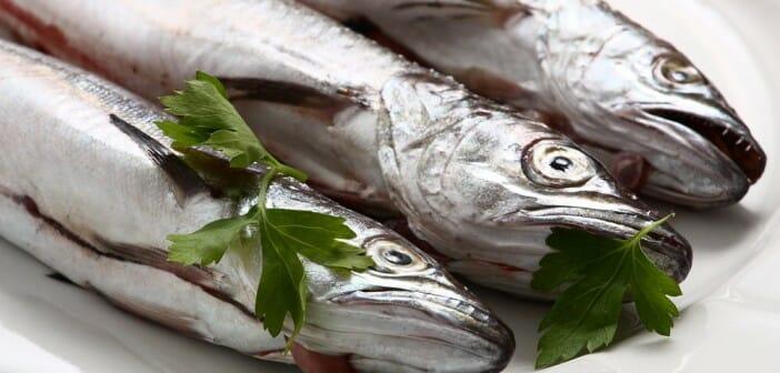 Le lieu est-il un poisson gras ?