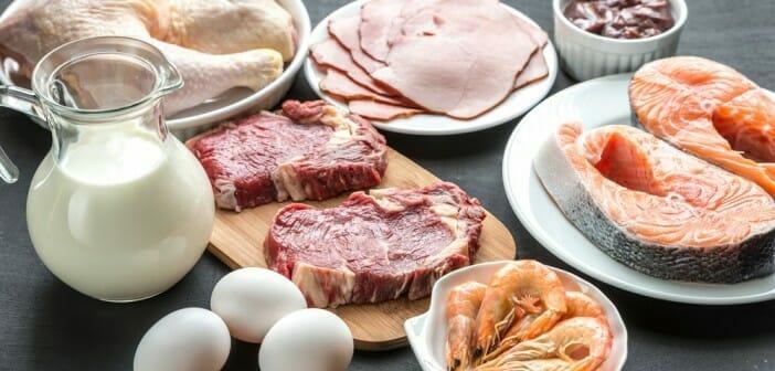 Débuter un régime hyper proteine