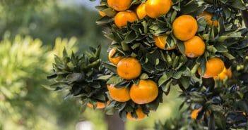 l-orange-amere-un-allie-pour-maigrir