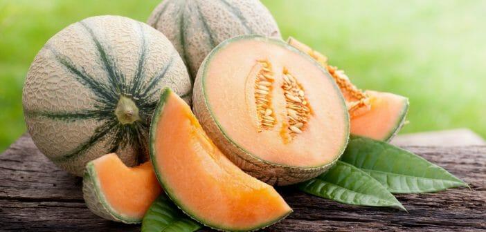 la-cure-de-melon-pour-maigrir