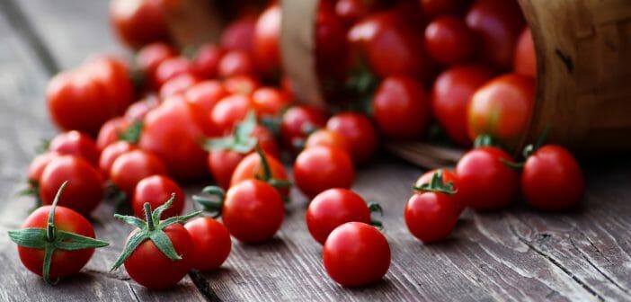 la-tomate-cerise-pour-maigrir