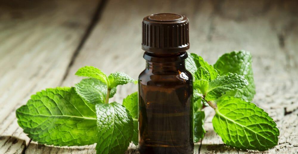 maigrir-avec-l-huile-essentielle-de-menthe-poivree