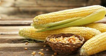 Peut-on manger du maïs pendant un régime