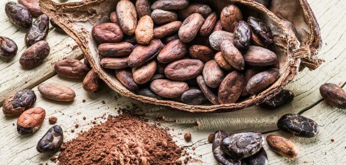 Comment consommer les fèves de cacao pour maigrir ? - Le