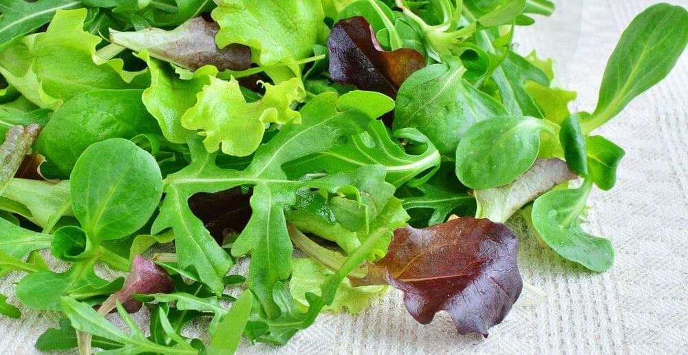 La salade verte et ses effets coupe faim