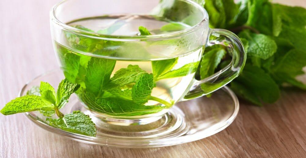 Le thé vert, un excellent coupe-faim
