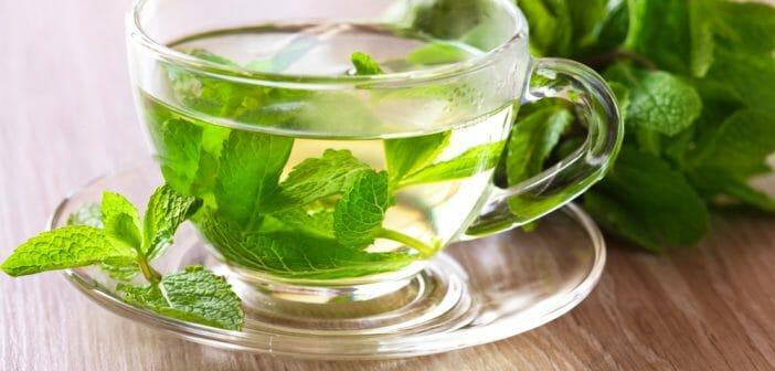 Le th vert un excellent coupe faim le blog - Boisson coupe faim naturel ...