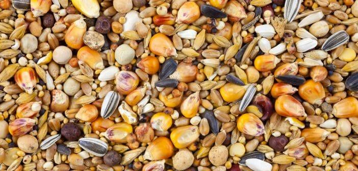 Manger des graines fait-il maigrir