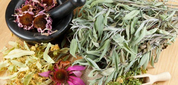Top 10 des plantes minceurs pour perdre du poids le blog for Plante pour mincir