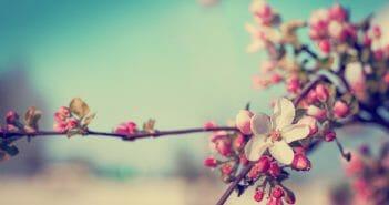 comment-maigrir-au-printemps