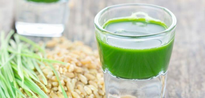 Le jus d'herbe de blé pour maigrir ? - Le blog Anaca3.com