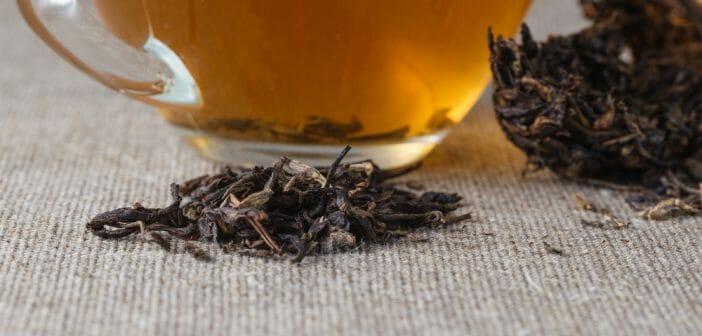 Le thé tuocha fait-il maigrir