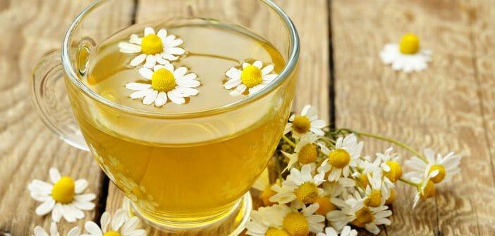 ¿Té de manzanilla para adelgazar?  - El blog de Anaca3.com