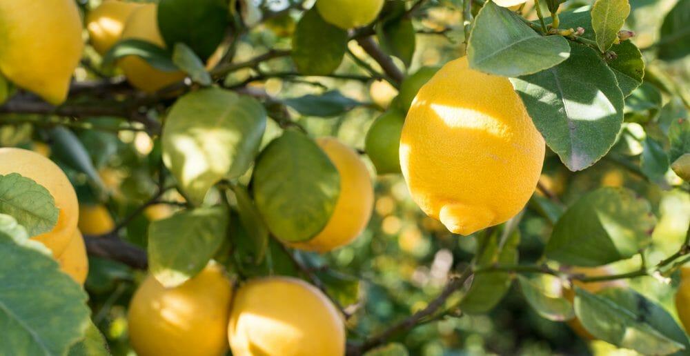 Comment maigrir en 5 jours avec le citron ?