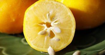 Les pépins de citron pour maigrir ?