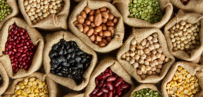 La protéine végétale : ses bienfaits pour prendre du muscle